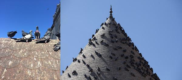 drone effaroucheur urbain pigeons